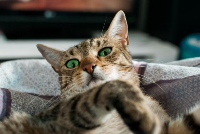 cat-2471507_1280